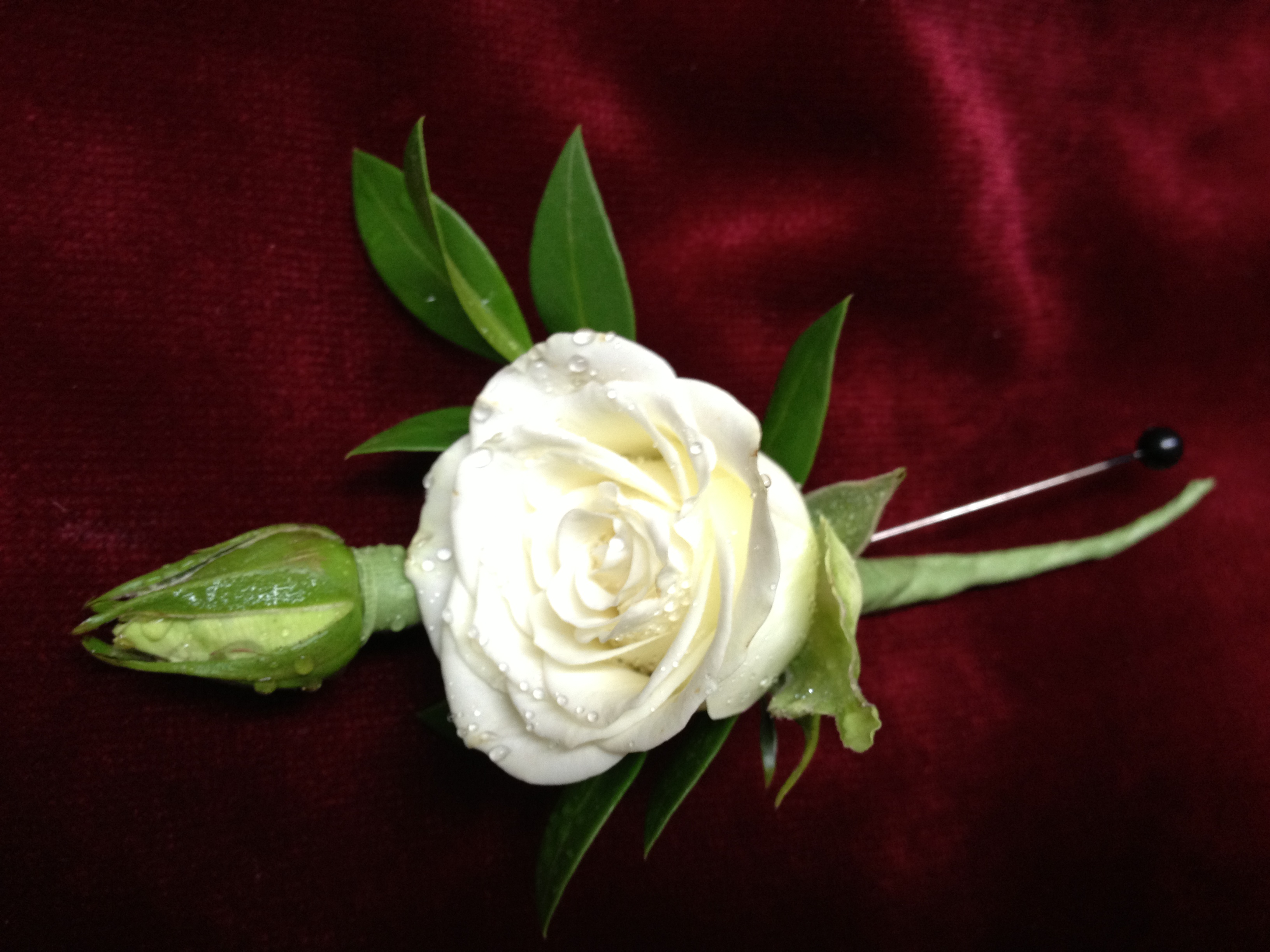 Gallery | Capitol FloristWhite Spray Rose Boutonniere